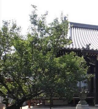 誉号―浄土宗の戒名